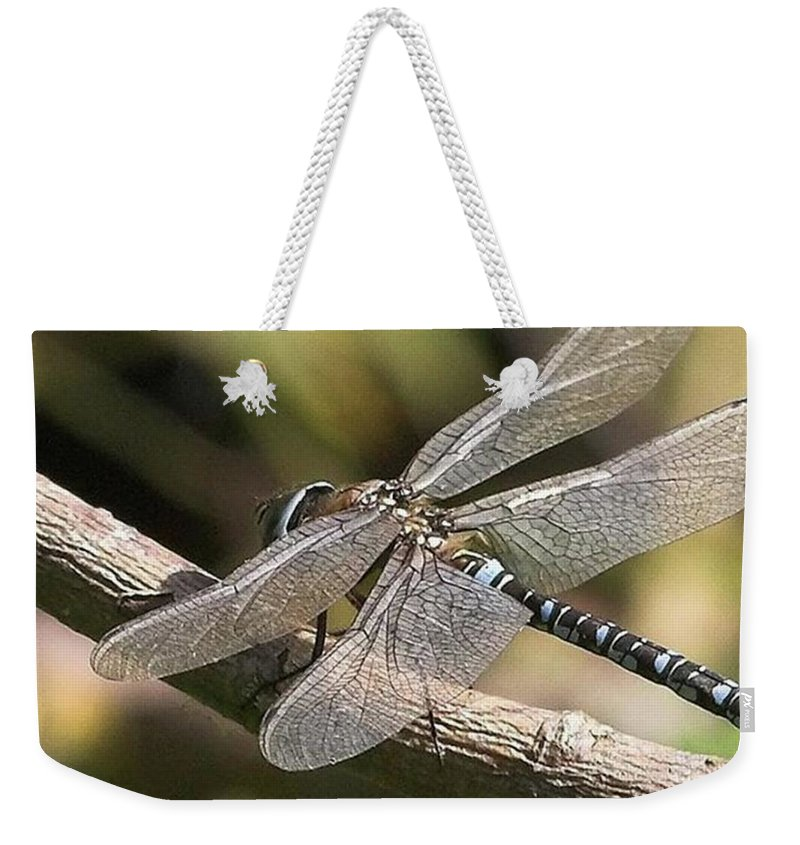 Dragonfly Weekender Tote Bag featuring the photograph Aeshna Juncea - Common Hawker taken At by John Edwards
