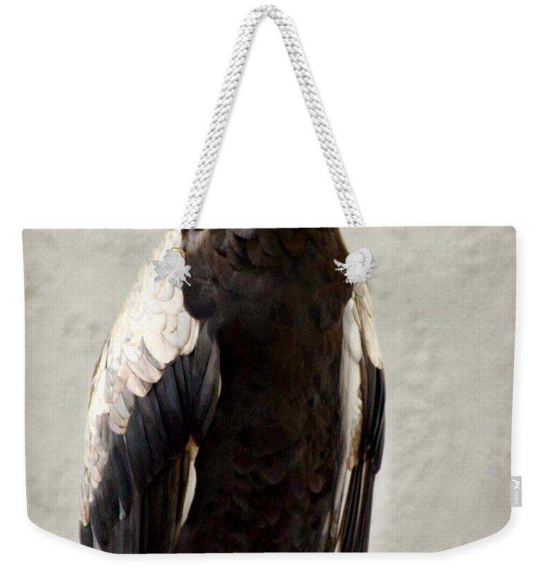Bateleur-african Eagle Weekender Tote Bag featuring the photograph African Eagle-bateleur II by Kathy M Krause