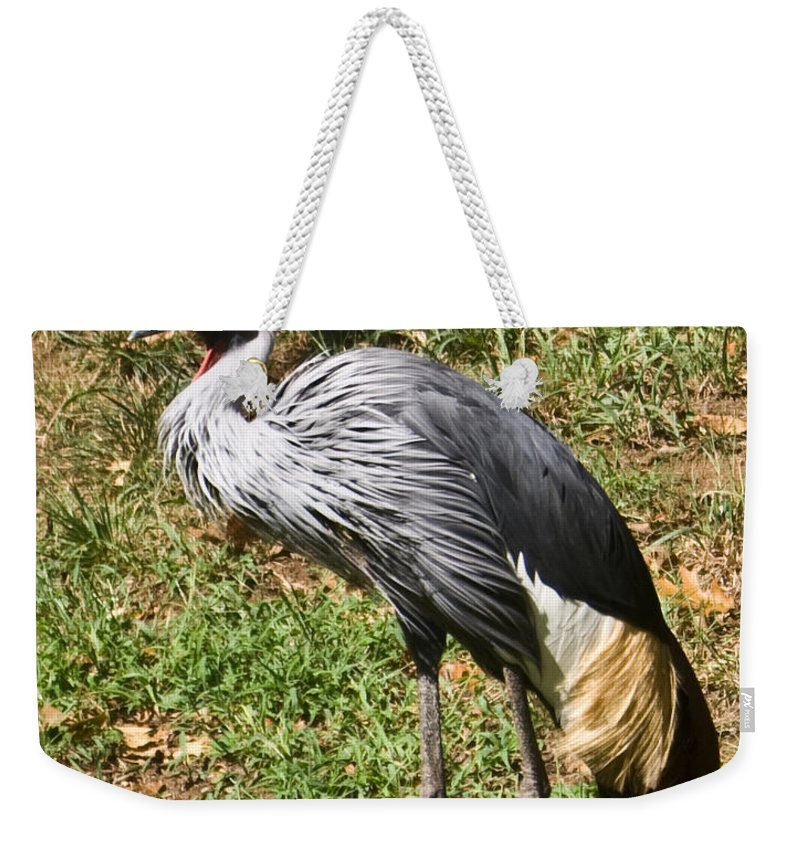 African Weekender Tote Bag featuring the photograph African Crowned Crane Poising by Douglas Barnett