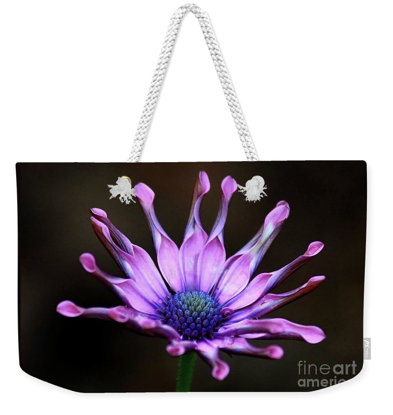 Nature Weekender Tote Bag featuring the photograph African Daisy Portrait by Carol Groenen