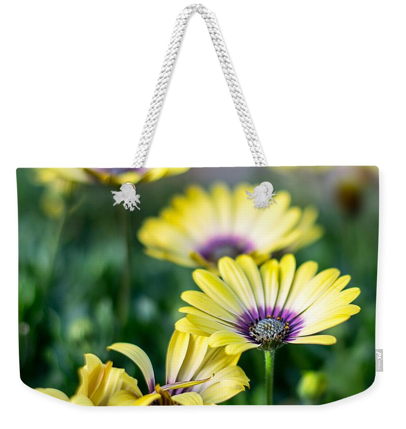 African Daisy Weekender Tote Bag featuring the photograph African Daisy by Susan Warren