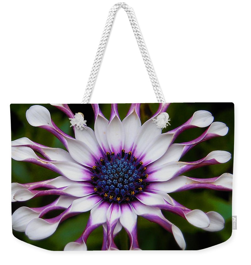 African Weekender Tote Bag featuring the photograph African Daisy by Svetlana Sewell