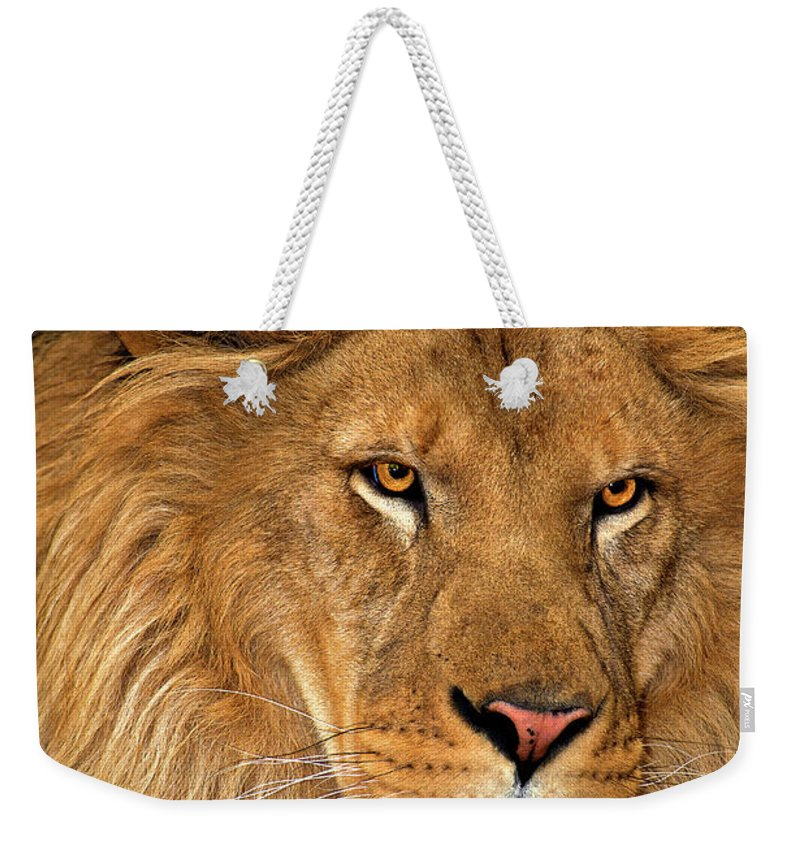 Dave Welling Weekender Tote Bag featuring the photograph African Lion Panthera Leo Wildlife Rescue by Dave Welling