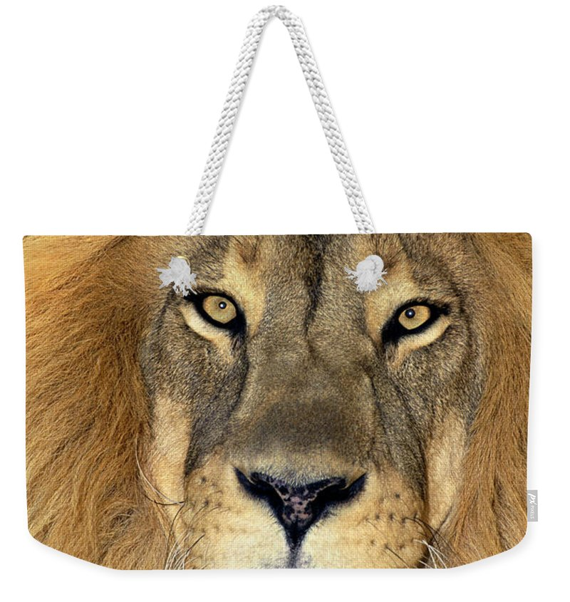 African Lion Weekender Tote Bag featuring the photograph African Lion Portrait Wildlife Rescue by Dave Welling
