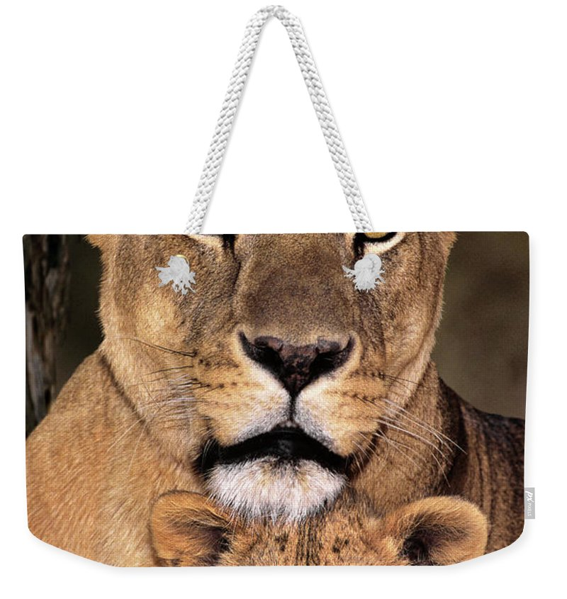 African Lion Weekender Tote Bag featuring the photograph African Lions Parenthood Wildlife Rescue by Dave Welling