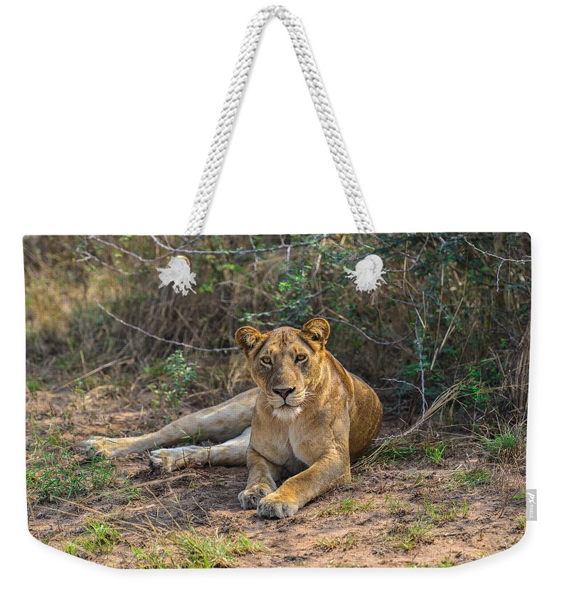 Africa Weekender Tote Bag featuring the photograph African Queen by David Finlayson