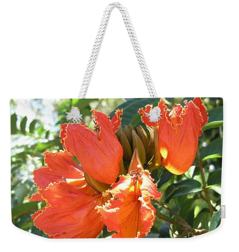 African Tulip Weekender Tote Bag featuring the photograph African Tulips by Mary Deal