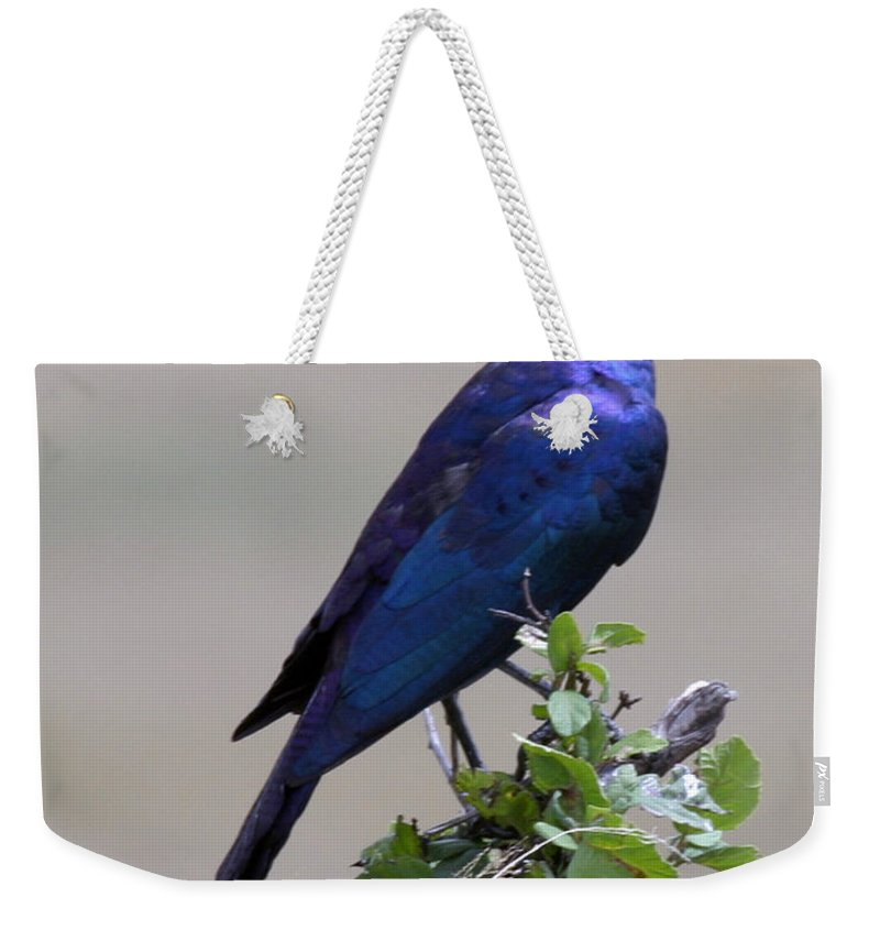 Starling Weekender Tote Bag featuring the photograph African White Eye Starling by Joseph G Holland
