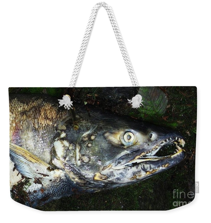 Photography Salmon Death Fish River Malahat Hatch Weekender Tote Bag featuring the photograph After Death by Seon-Jeong Kim