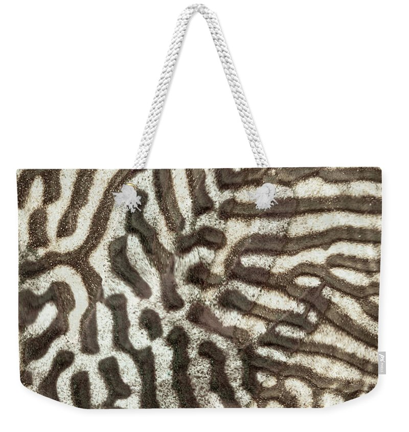Zebra Weekender Tote Bag featuring the photograph After The Storm by Scott Campbell