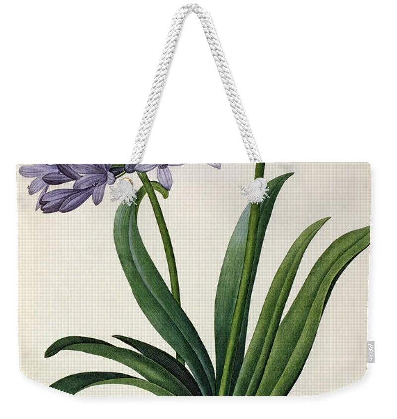 Agapanthus Weekender Tote Bag featuring the painting Agapanthus Umbrellatus by Pierre Redoute
