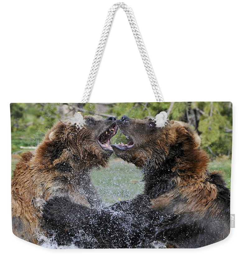 Yellowstone Weekender Tote Bag featuring the photograph Agree To Disagree by Sandra Bronstein