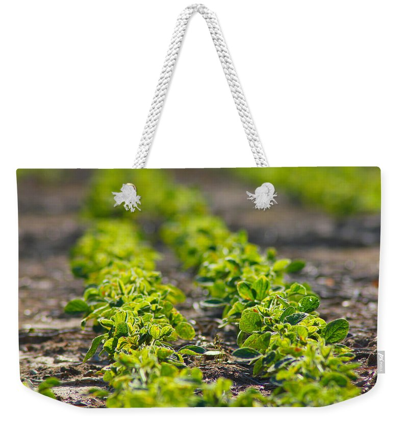 Crop Weekender Tote Bag featuring the photograph Agriculture- Soybeans 1 by Karen Wagner