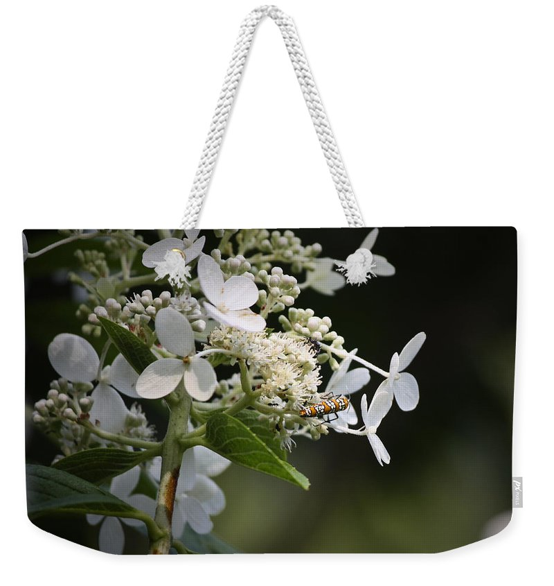 Ailanthus Weekender Tote Bag featuring the photograph Ailanthus Webworm Moth 1 by Teresa Mucha