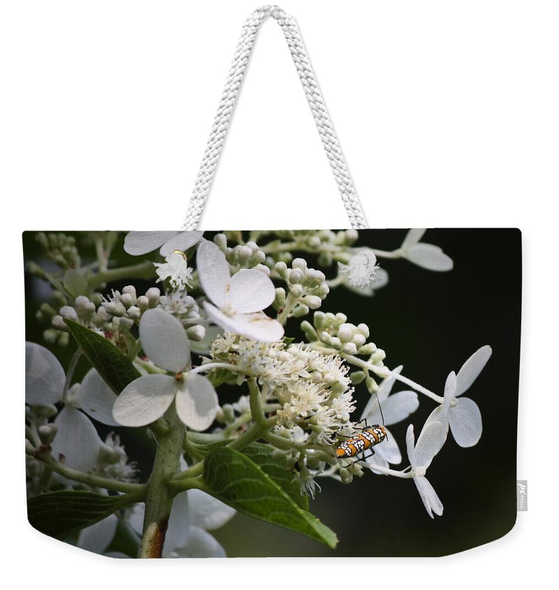 Ailanthus Weekender Tote Bag featuring the photograph Ailanthus Webworm Moth 2 by Teresa Mucha