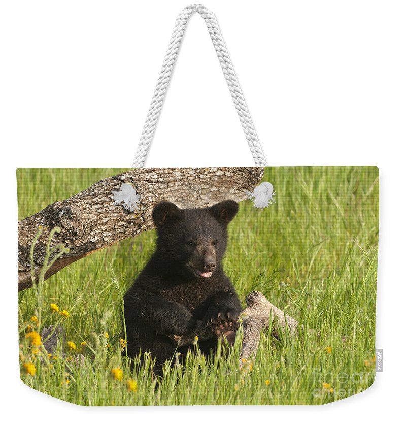 Bear Weekender Tote Bag featuring the photograph Ain't I Cute by Sandra Bronstein