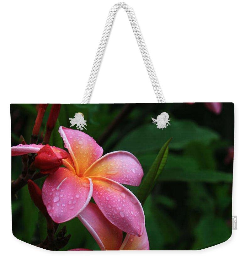Aloha Weekender Tote Bag featuring the photograph Akeakamai Pua Melia Tropical Plumeria by Sharon Mau