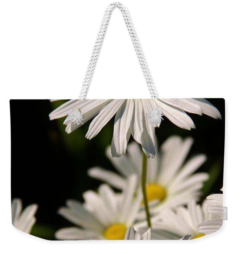 Alaskan Shasta Daisy Weekender Tote Bag featuring the photograph Alaskan Shasta Daisy by Lori Mahaffey