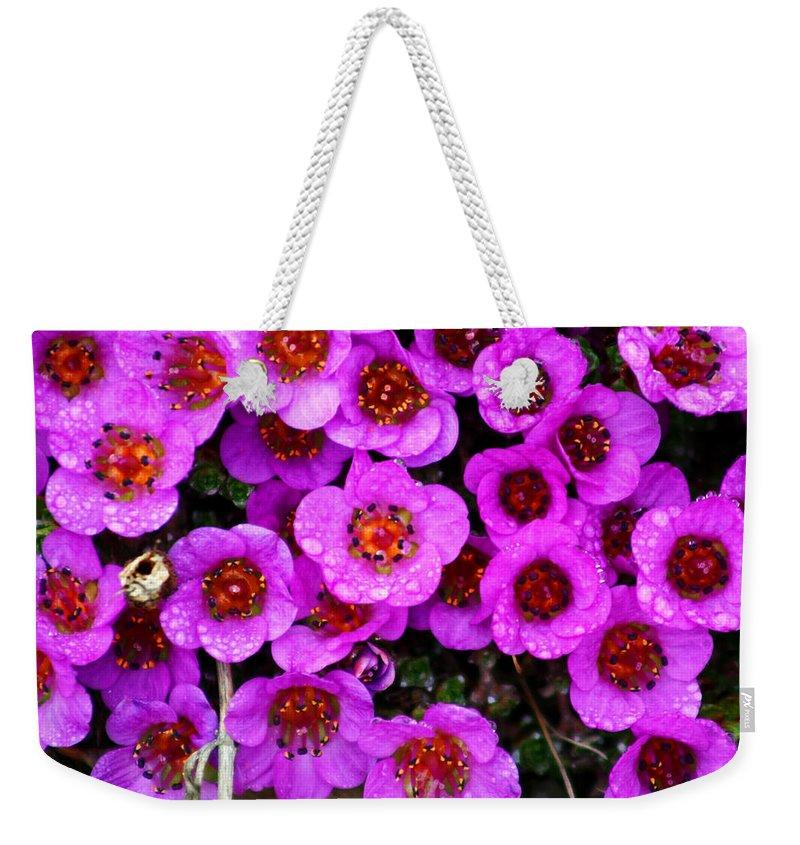 Flowers. Wild Flowers Weekender Tote Bag featuring the photograph Alaskan Wild Flowers by Anthony Jones