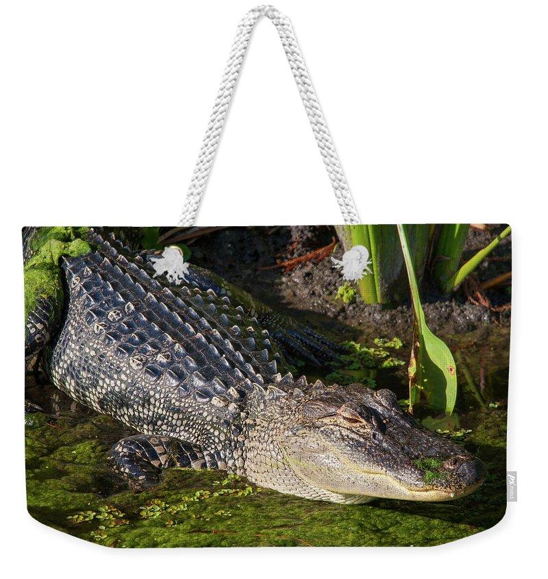 Gator Weekender Tote Bag featuring the photograph Algae Gator 2 by Arthur Dodd