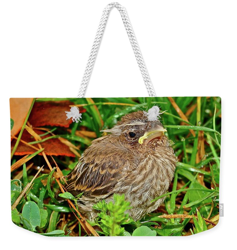 Bird Weekender Tote Bag featuring the photograph All Alone by Diana Hatcher