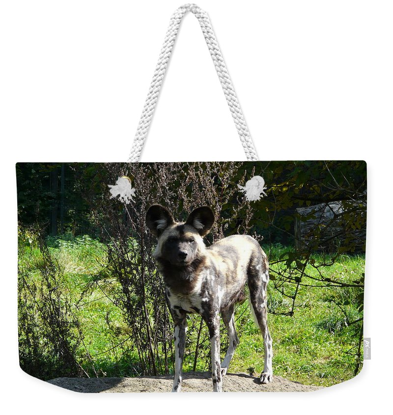 African Weekender Tote Bag featuring the photograph All Ears by Valerie Ornstein