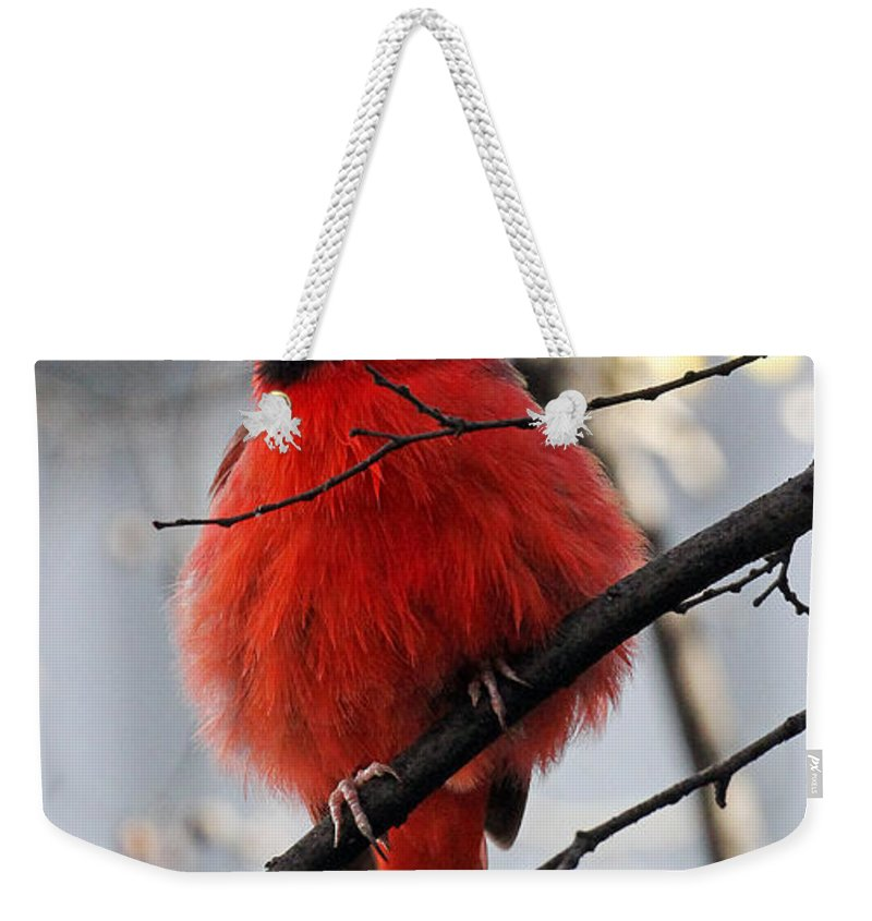 Cardinal Weekender Tote Bag featuring the photograph All Fluff by Jennifer Robin