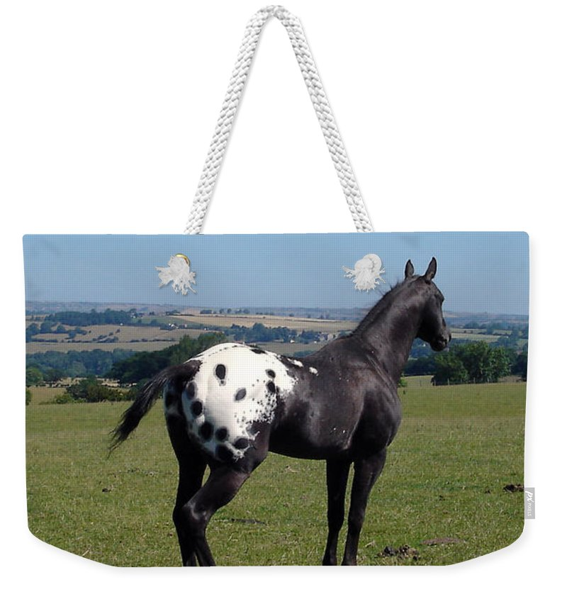 Horses Weekender Tote Bag featuring the photograph All He Surveys by Susan Baker