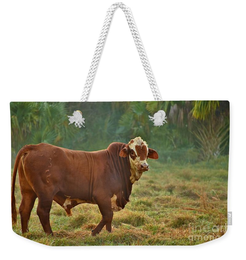 All Heart Weekender Tote Bag featuring the photograph All Heart by Lisa Renee Ludlum
