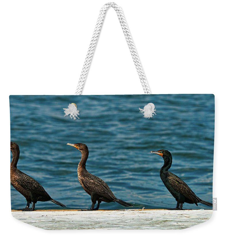 Cormorant Weekender Tote Bag featuring the photograph All In A Row by Christopher Holmes