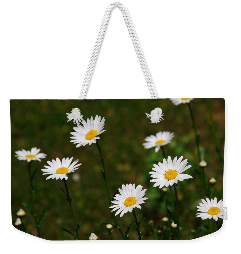 Daisy Weekender Tote Bag featuring the photograph All The Daisies by Susanne Van Hulst