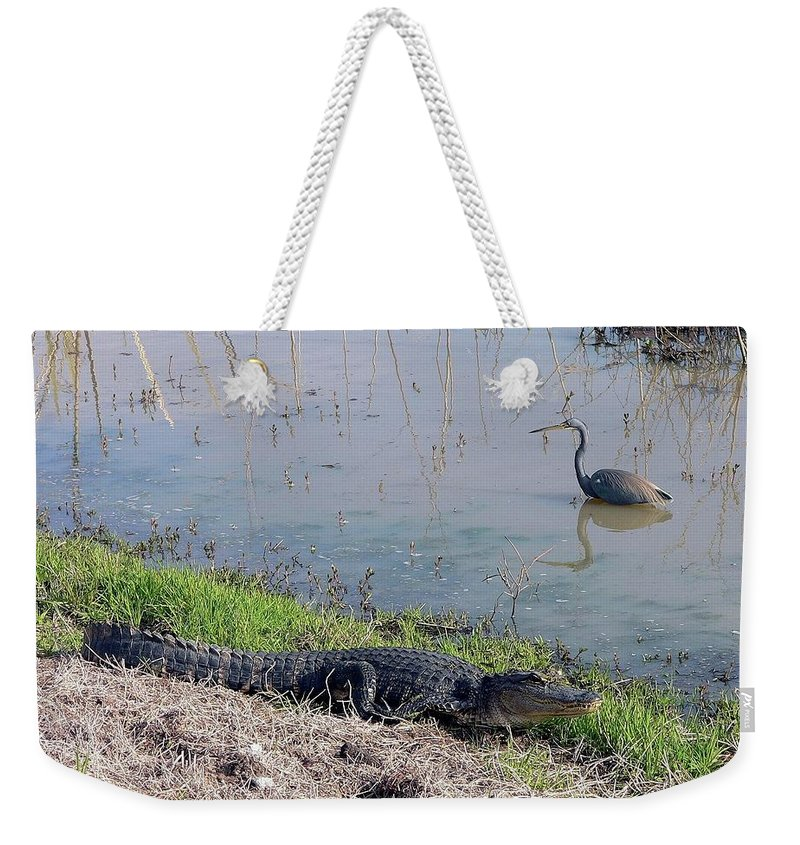 Nature Weekender Tote Bag featuring the photograph Alligator And Heron by Al Powell Photography USA