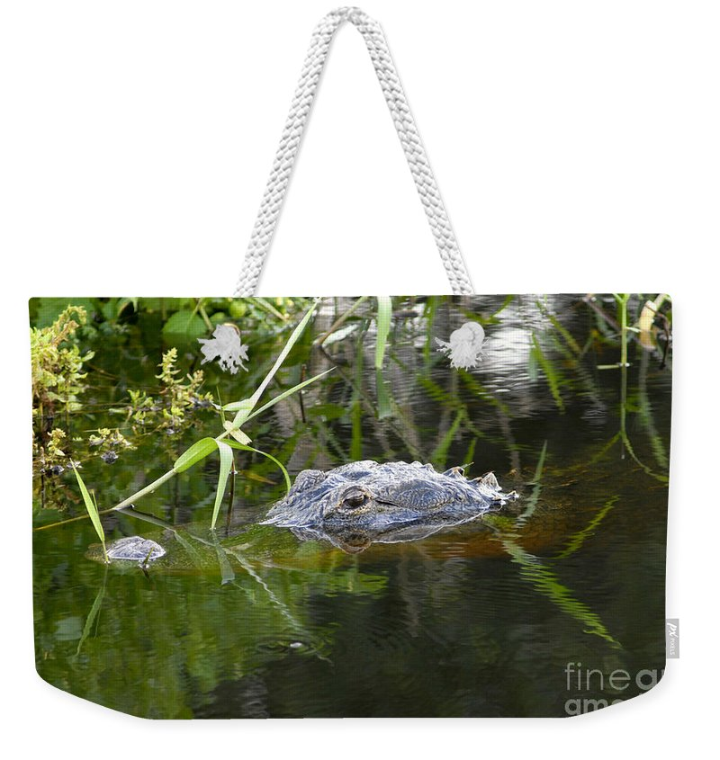 Alligator Weekender Tote Bag featuring the photograph Alligator Hunting by David Lee Thompson