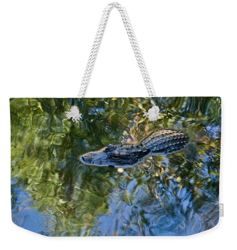 Alligator Weekender Tote Bag featuring the photograph Alligator stalking by Douglas Barnett