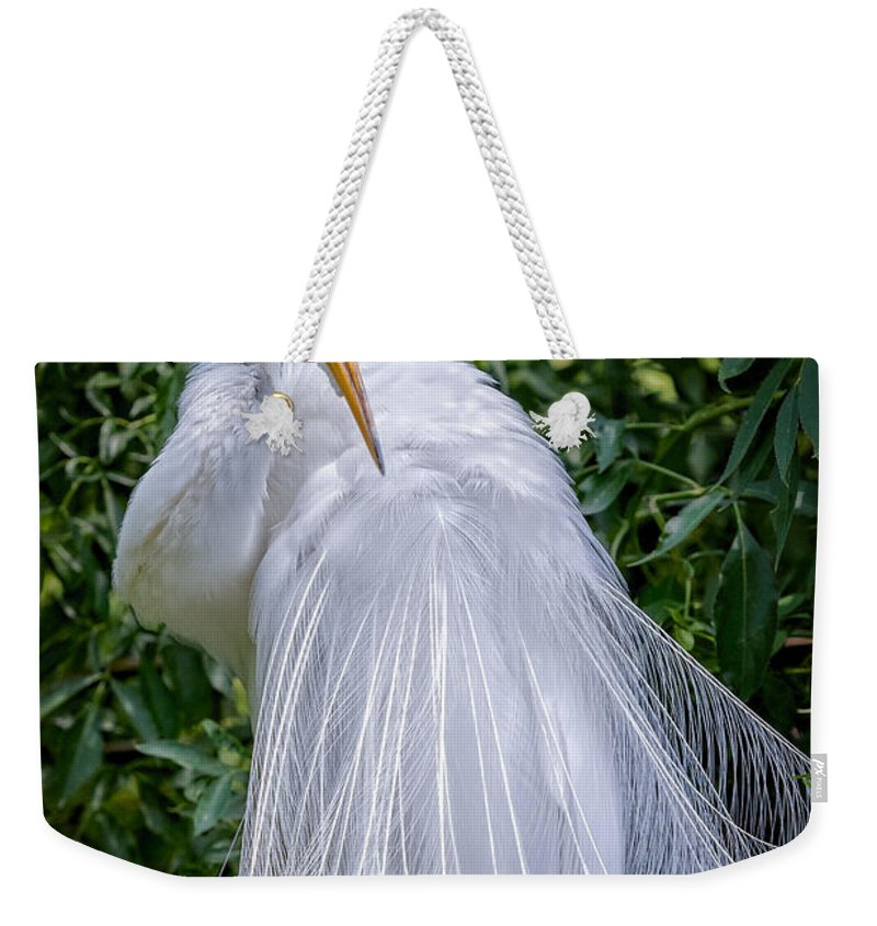 Avian Weekender Tote Bag featuring the photograph Alluring In White by Christopher Holmes
