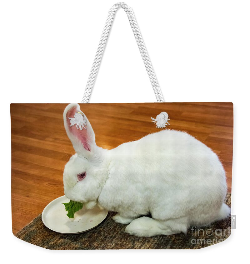 Williamsport Maryland Peter Rabbit Rabbits Animal Animals Creature Creatures Bunny Bunnies Weekender Tote Bag featuring the photograph Almost Finished by Bob Phillips