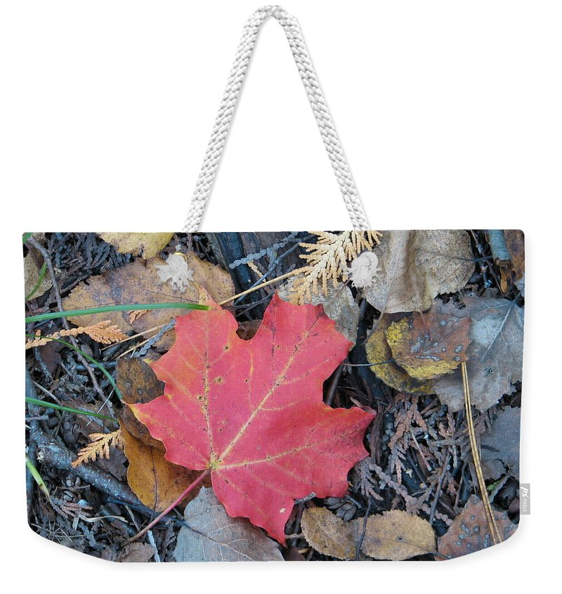 Leaves Weekender Tote Bag featuring the photograph Alone In The Woods by Kelly Mezzapelle