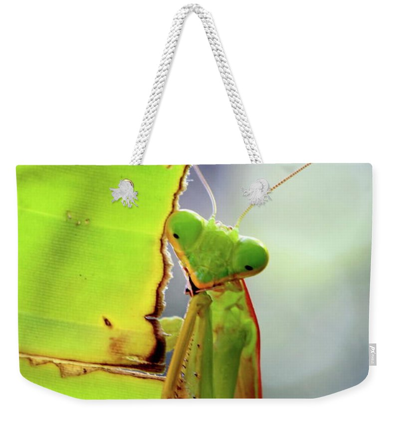 Animal Weekender Tote Bag featuring the photograph Alone by Jufri Mustafa