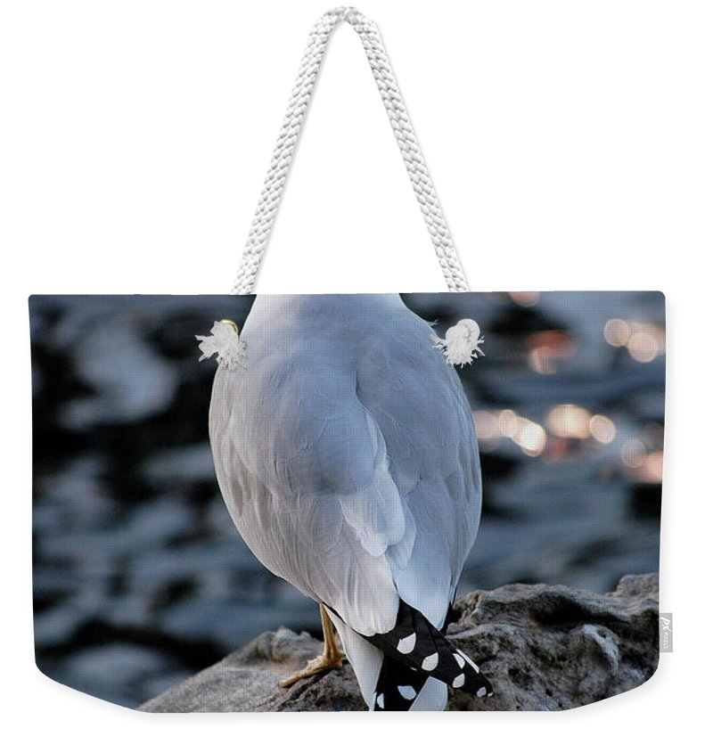 Seagull Weekender Tote Bag featuring the photograph Alone by Robert Meanor
