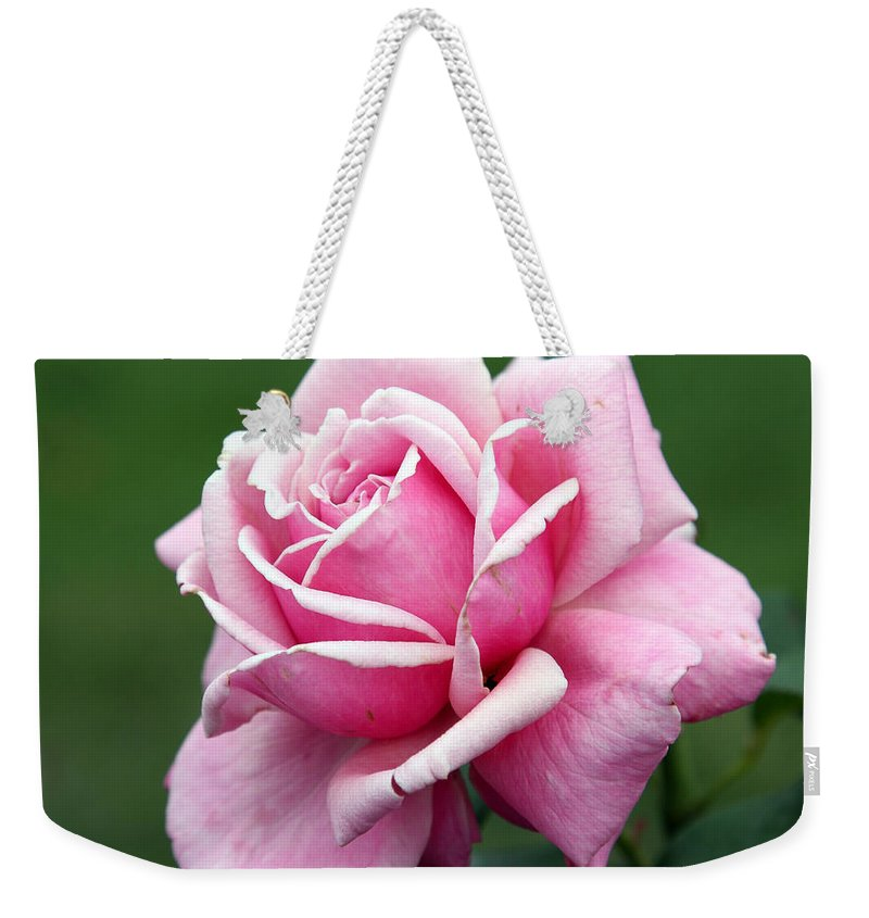 Rose Weekender Tote Bag featuring the photograph Alone Time by Amanda Barcon