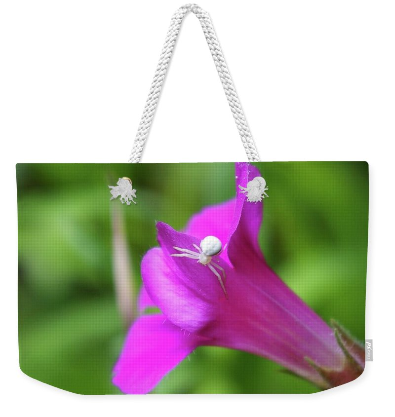 Spiders Weekender Tote Bag featuring the photograph Along Came A Spider by Jeff Swan