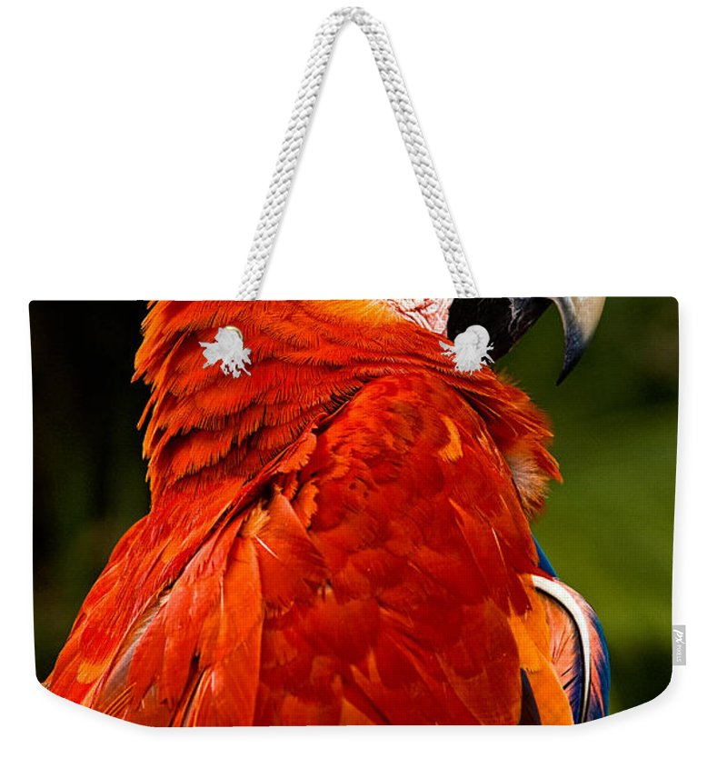 Bird Weekender Tote Bag featuring the photograph Aloof In Red by Christopher Holmes