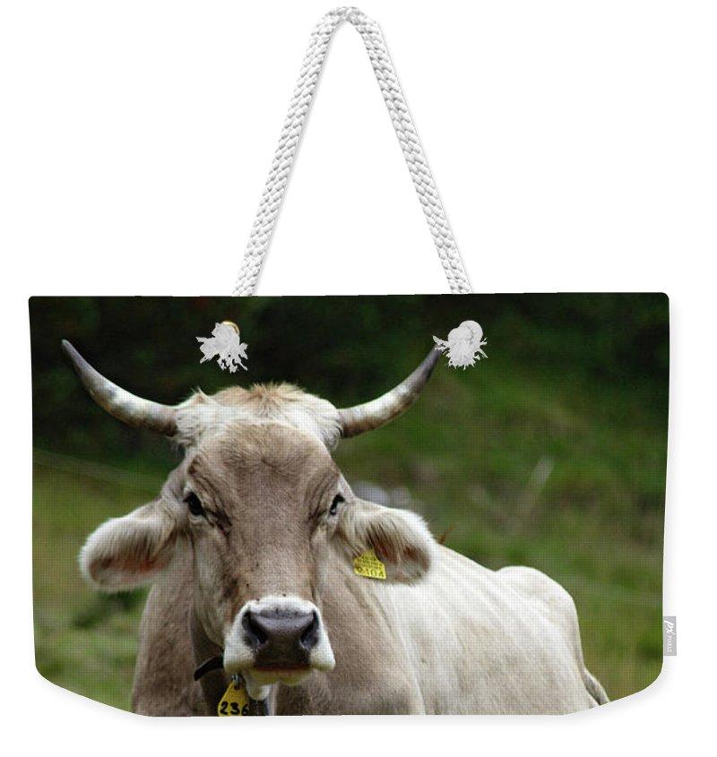 Switzerland Weekender Tote Bag featuring the photograph Alpine Cow by Luigi Girola