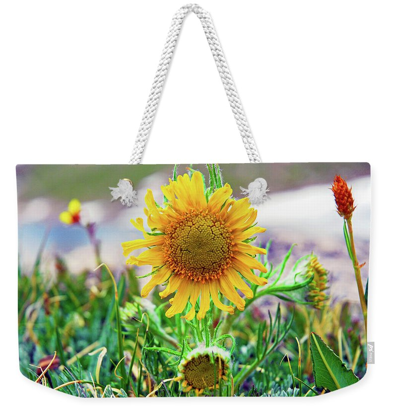 Sunflower Weekender Tote Bag featuring the photograph Alpine Sunflower In Summer by Robert Meyers-Lussier