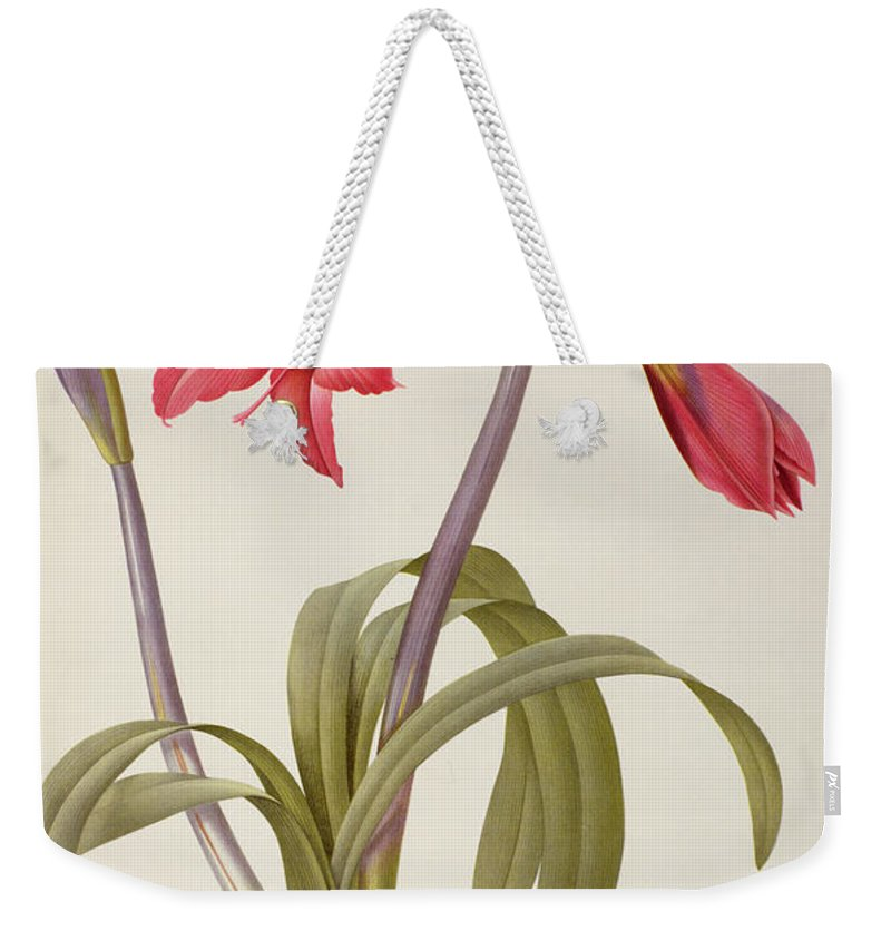 Amaryllis Weekender Tote Bag featuring the drawing Amaryllis Brasiliensis by Pierre Redoute