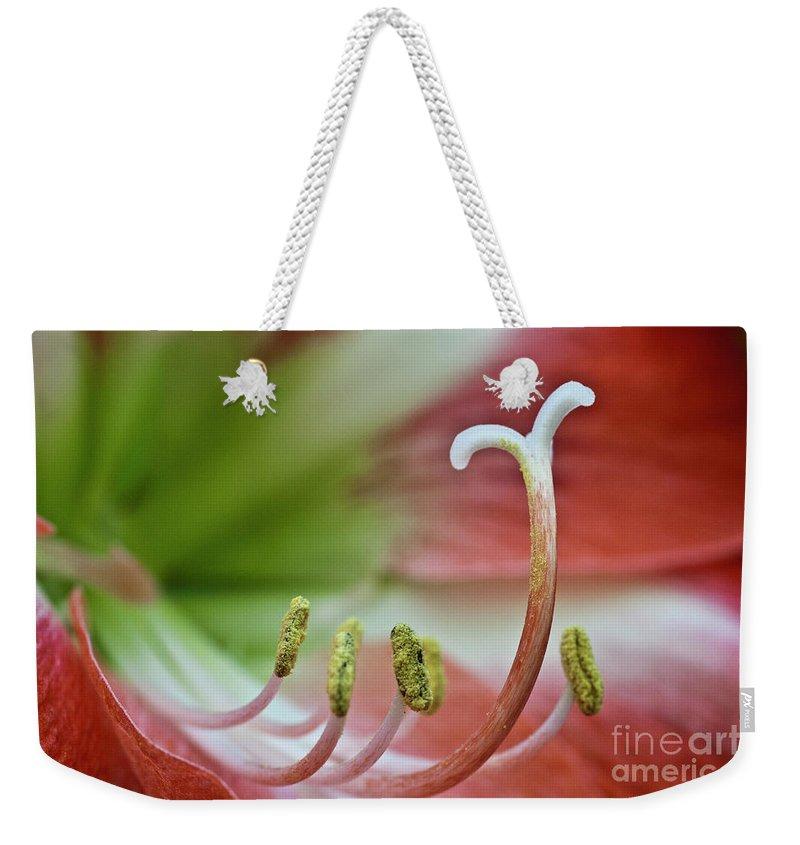 Amaryllis Weekender Tote Bag featuring the photograph Amaryllis Flower by Heiko Koehrer-Wagner