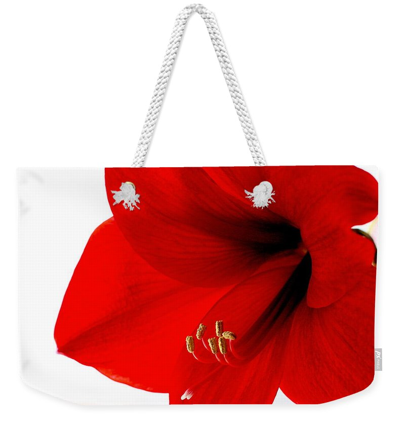Amaryllis Weekender Tote Bag featuring the photograph Amaryllis Square by Angela Rath