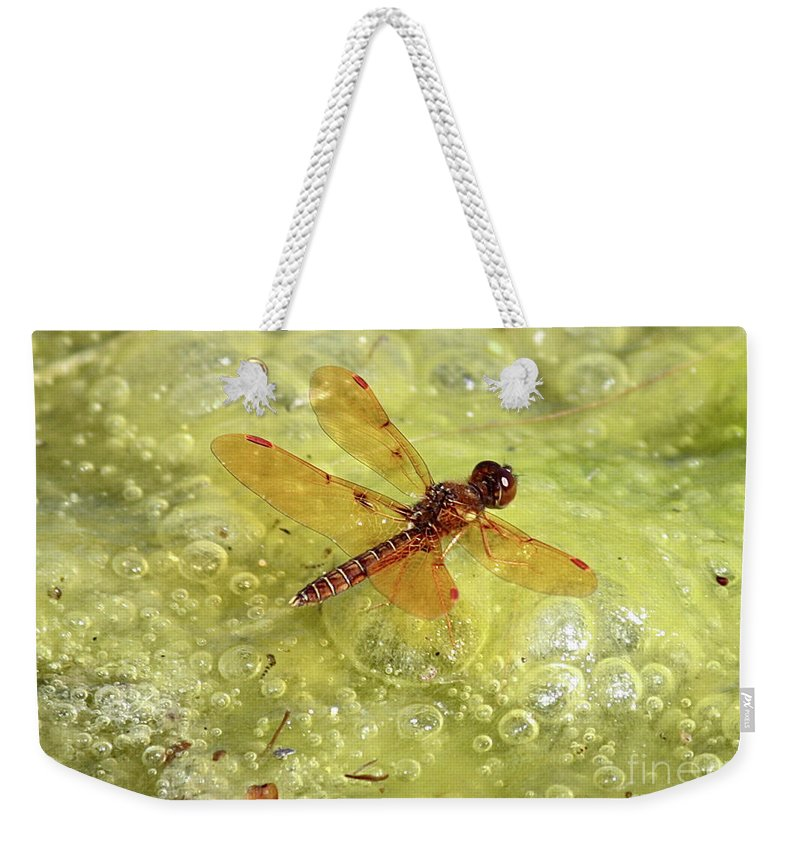 Dragonfly Weekender Tote Bag featuring the photograph Amber Dragonfly On The Pond by Carol Groenen
