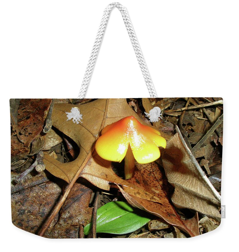 Mushroom Weekender Tote Bag featuring the photograph Amberina Mushroom - Tiny Jewel In The Forest by Mother Nature