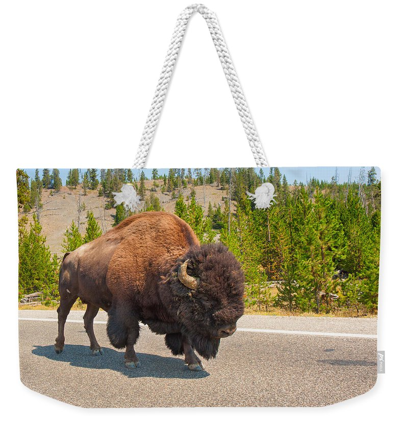American Bison Weekender Tote Bag featuring the photograph American Bison Sharing The Road In Yellowstone by John M Bailey